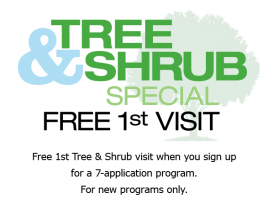 Tree & Shrub Special – Free First Visit