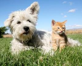 Pet Lawn Care