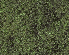 Environmental Benefits of Turfgrass