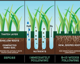 Aeration and Seeding Effects