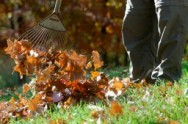 Fall lawn care raking leaves