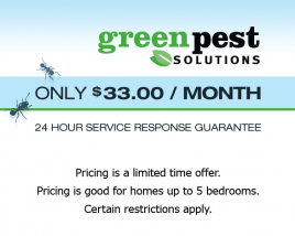Pest Control Service from Green Pest Solutions for $33.00 / Month