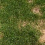 Brown Patch: Those Mysterious Spots on Your Lawn