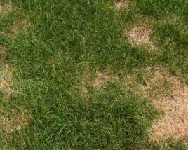 Fall is the Time to Repair Turf Damage