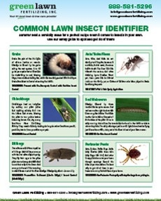 GLF-Lawn-Insect-Guide-230x286