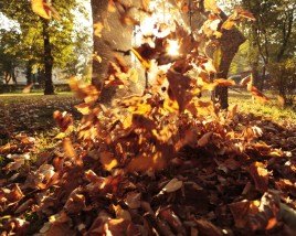 Last-minute Fall Lawn Care Tips