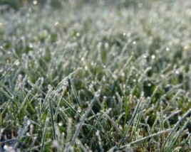 Winter lawn fertilizing