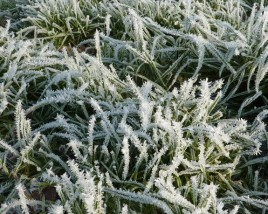 Preparing your lawn for the winter