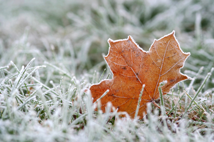 unraked leafWinterize