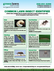 Lawn Insect Guide