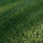The Best Kept Secrets to A Healthy Green Lawn