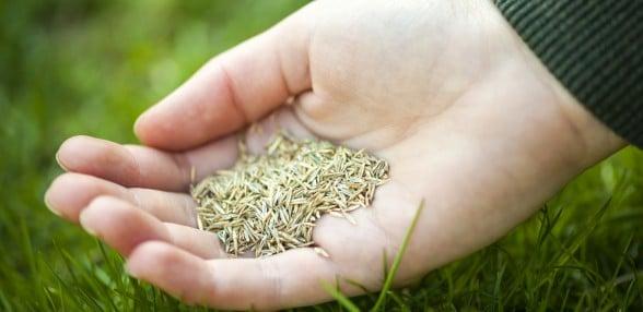 Lawn-Seeding-588x286