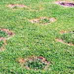 Warning Signs of Incoming Lawn Disease