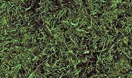 lawn-01