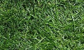 lawn-02