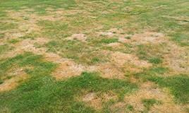 Lawn Disease Identification Library Green Lawn Fertilizing