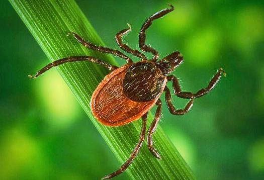 Tricks For Tick Prevention Green Lawn Fertilizing