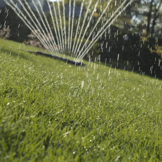 How to Water Your Lawn Correctly