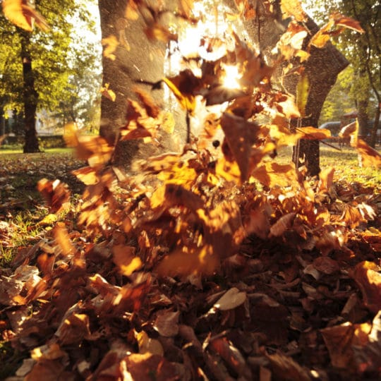 Five Fall Lawn Care Steps