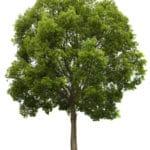 Winter Tree Fertilizing