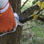 Pruning tree
