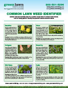 Lawn Weed Guide