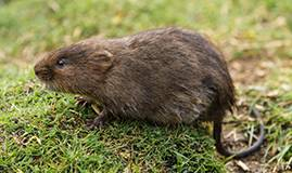 Moles and Voles Green Lawn Fertilizing