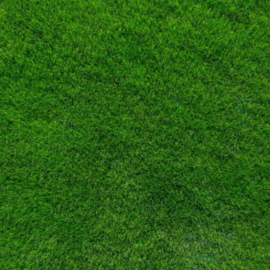How To Keep Your Lawn Green All Year