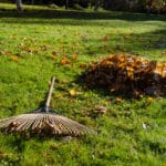 To Rake Or Not To Rake: How Do Falling Leaves Affect Lawn Health?