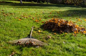 Rake leaves? How leaves affect your lawn.