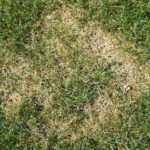 5 Most Common Causes of Grass Disease