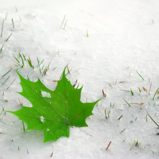 How Cold Weather Affects Your Lawn