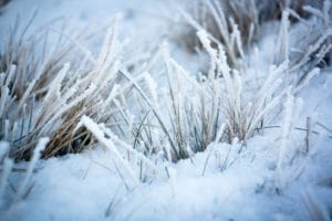 Protect your lawn during winter