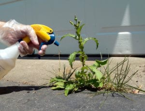 Spraying a Weed