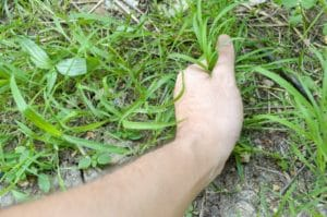 hand pulling grass weed