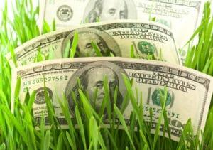 money in lawn