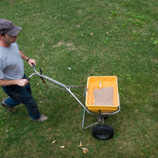 What is the Best Fertilizing Schedule for Your Lawn?
