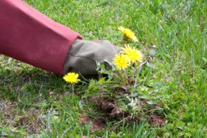 Get rid of weeds by hand