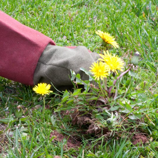 How to Get Rid of Weeds in Your Grass