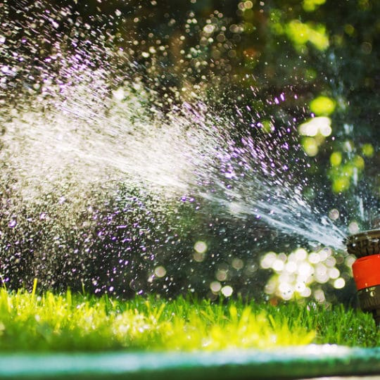 How Much Water Does Your Lawn Need?