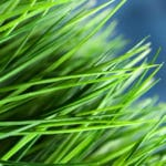 Do You Know What Type of Grass is in Your Lawn?