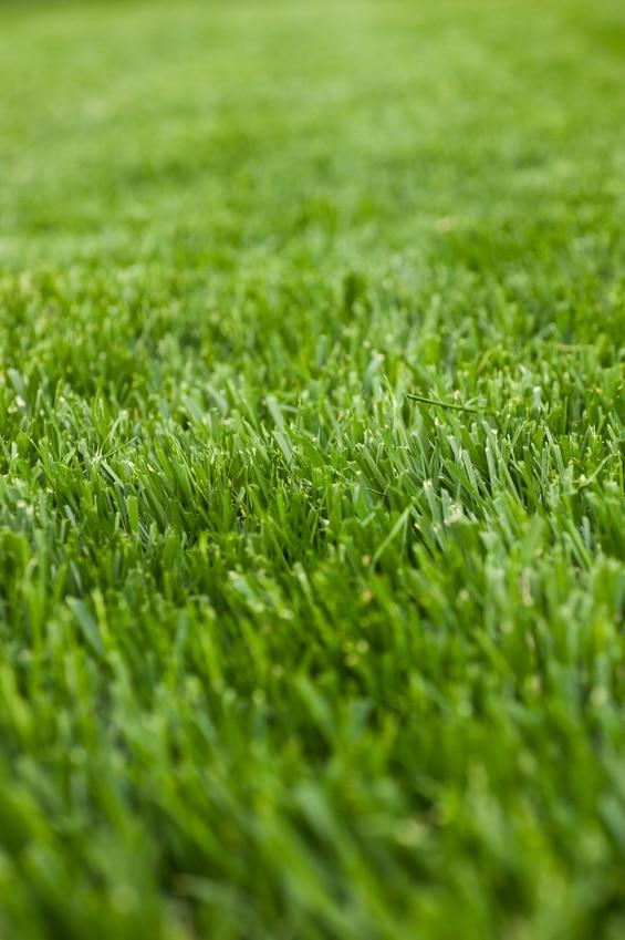 Tall Fescue Green Lawn Fertilizing
