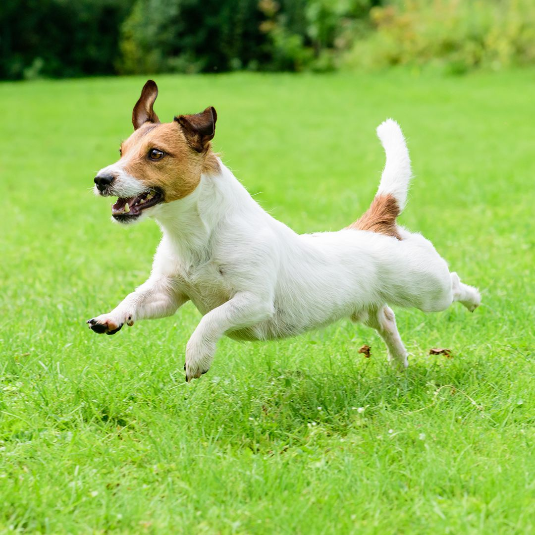 Pet Safe Lawn Care Tips To Remember This Season