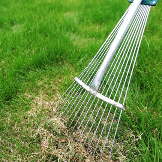 How to Reduce Thatch in Your Lawn