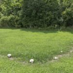 What is Fairy Ring Lawn Disease?