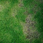 How do I Know if My Lawn Has a Disease?