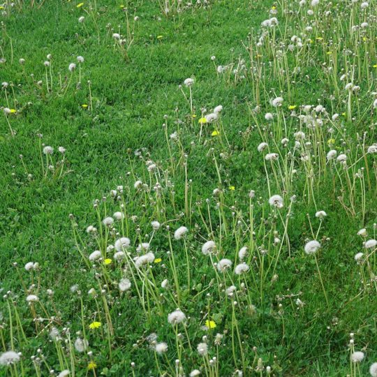 How to Get Rid of Weeds in Grass
