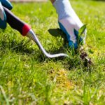 Organic Lawn Care: Is It Right for You?