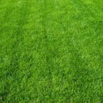 Three Ways Lime Helps Your Lawn