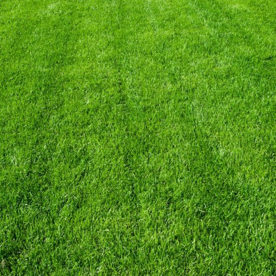 healthy weed free lawn